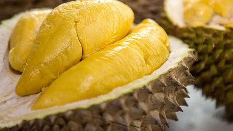 Want to Plant a Durian Tree